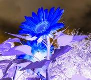 En blomma i symbol arkivfoto