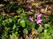 En blomma i en trädgård royaltyfri foto