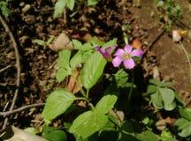 En blomma i en trädgård royaltyfria foton