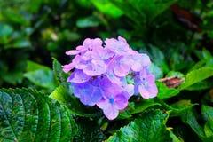 En blomma i trädgård royaltyfri bild