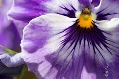 En blomma i vår trädgård Arkivbild