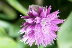 En blomma i vårt rum Arkivfoton