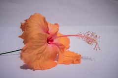 En blomma i en vit bakgrund arkivbilder