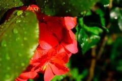 En blomma med droppar av regn arkivfoto