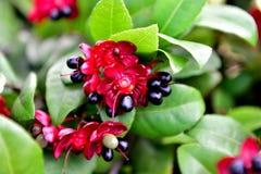 En blomma med en framsida Fotografering för Bildbyråer