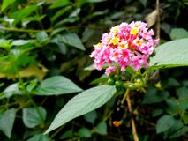 En blomma med olika färgskuggor royaltyfri foto