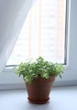 En blomma på fönstret Arkivbild