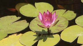 En blomma på vattnet fotografering för bildbyråer