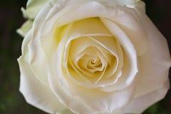 En blomma en vitros Royaltyfria Bilder