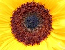 En blommanärbild Royaltyfria Foton