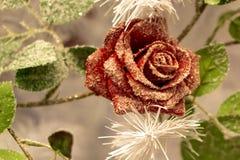 En blommaordning Granfilialer, prydliga kottar och röda rosor i det insnöat förkylningen jullivstid fortfarande royaltyfri fotografi