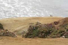 En blommig bana till en ensam havsfiskmås som håller ögonen på bränningen på en molnig dag Royaltyfria Foton