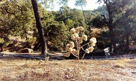 En blommig växt i kullar Arkivfoton
