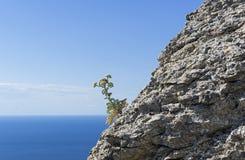 En blomningväxt på det kust- vaggar arkivfoton