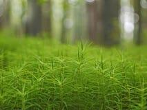 En blomrabatt av grön mossa Royaltyfria Bilder