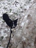 En bo Sneeuw Стоковая Фотография