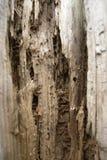 En bois érodez image stock