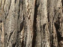 En bois Photographie stock