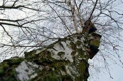 En bois et birdhous Image libre de droits