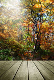 En bois videz et brouillez le fond d'automne Images libres de droits