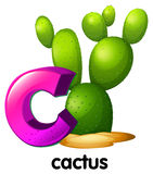 En bokstav C för kaktus Arkivbild