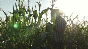 En bonde, en agronom som arbetar i f?ltet, kontrollerar att mogna havremajskolvar En aff?rsman fr?n kontroller f?r en minnestavla arkivfilmer