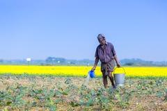 En bonde bevattnar i hans fält för kolonin för äggväxter på Sirajdhikha, Munshigonj, Dhaka, Bangladesh royaltyfri fotografi