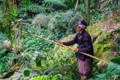 En bonde Cutting Grass Crop för nötkreatur matar i lantgårdfältet på Banjar Kuwum, den Ringdikit byn, norr Bali, Indonesien arkivfoto