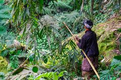 En bonde Cutting Grass Crop för nötkreatur matar i lantgårdfältet på Banjar Kuwum, den Ringdikit byn, norr Bali, Indonesien royaltyfri foto