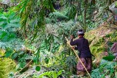 En bonde Cutting Grass Crop för nötkreatur matar i lantgårdfältet på Banjar Kuwum, den Ringdikit byn, norr Bali, Indonesien royaltyfri fotografi