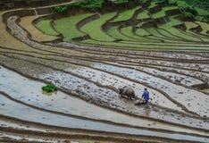 En bonde med vattenbuffeln på fältet royaltyfri foto