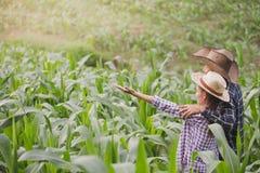 En bonde och hans fruanseende i deras cornfield lyckligt arkivbilder