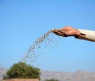 En bonde som kastar DAP-gödningsmedel i fälten royaltyfri bild