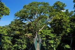 EN BONNE SANTÉ (Forest Research Institute Malaysia) images libres de droits