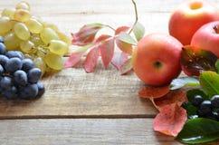En borste av svarta druvor och vita druvor låter vara red isolerad white för höst begrepp skördgulingblommor nytt organiskt på et Royaltyfria Bilder