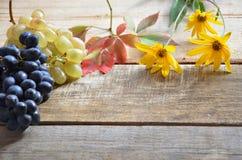 En borste av svarta druvor och vita druvor låter vara red isolerad white för höst begrepp skördgulingblommor nytt organiskt på et Royaltyfri Bild