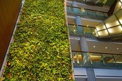 En bosatt vägg för grön växt i Ottawa, Kanada Royaltyfri Bild