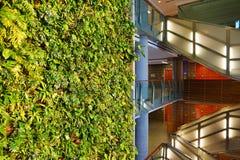 En bosatt vägg för grön växt i Ottawa, Kanada Royaltyfria Bilder
