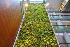 En bosatt vägg för grön växt i Ottawa, Kanada Arkivfoto