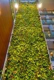 En bosatt vägg för grön växt i Ottawa, Kanada Fotografering för Bildbyråer