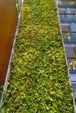 En bosatt vägg för grön växt i Ottawa, Kanada Royaltyfria Foton