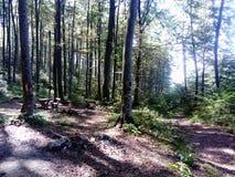 En bosque con los árboles Foto de archivo libre de regalías