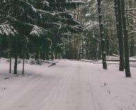 En bosque del invierno Fotos de archivo libres de regalías