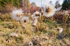 En bosque del otoño imágenes de archivo libres de regalías