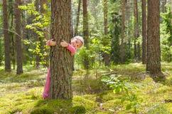 En bosque del verano Imagenes de archivo