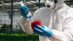 En botaniker fyller en spansk peppar med flytande från en injektionsspruta stock video