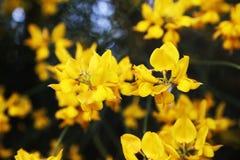 En bouqet av blommor Royaltyfri Bild