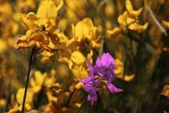 En bouqet av blommor Arkivbilder