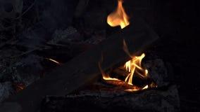 En brandbränning i skogen lager videofilmer
