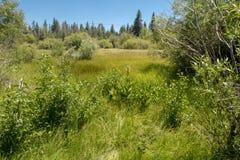 En breda ut sigäng nära Lake Tahoe arkivbild